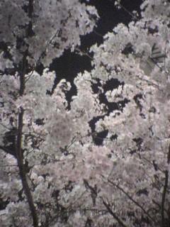 20050406.jpg